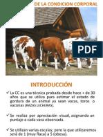 Condicion Corporal Modificado Sep-2011 por Dr. Juan Vargas UCE