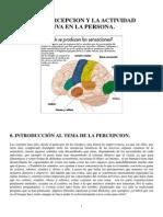 Sensacion_y_Percepcion