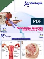 Fecundacion Desarrollo Embrionario y Fetal (1)