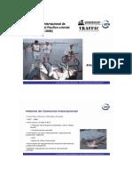 Comercio Internacional de Tiburones
