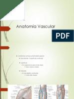 anato vascular 2