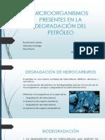 Microorganismos Presentes en La Degradación Del Petróleo