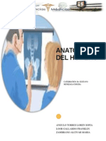 Anatomia Del Humero
