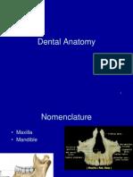 Dental Anatomi 2012
