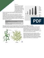 The Evolution of Corn