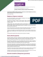 Plante Utilizate in Aromoterapie Si Efectele Lor (Partea 2) Terapii Naturiste UtileCopii