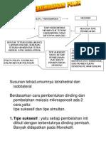 pertum-2