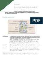 Eukaryotes, Prokaryotes and Cellular Organisation