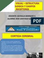Neurofisiologia de La Vision- CAMPOS RECEPTORES