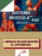 Sistema Muscular II