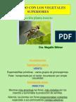 Interacción Planta Insecto