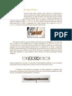 Origen y Evolución de La Flauta