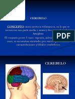 cerebelo URSULAA