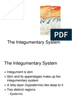 Sistem Integumen FREE