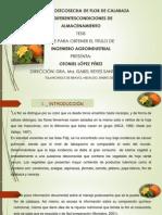 flor de calabaza.pptx