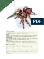 10 Things to Know Tarantula