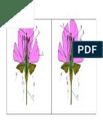 Guía Partes de La Flor.doc
