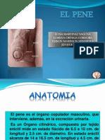 Expo El Pene Urologia