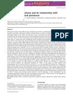 Anatomia Fp y Aquiles