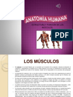 Anatomia Humana Musculos Powerpoint