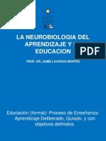 La Neurobiologia Del Aprendizaje y La Educacion Abril2010-1