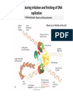 Presentation10 Initiation & finishing of DNA replication.pdf
