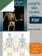 Sistema Oseo Esqueleto Axial