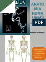 Sistema Oseo Esqueleto Apendicular