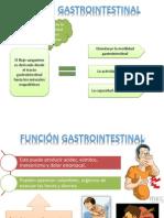 Función Gastrointestinal Fisiologia
