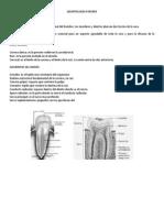 estomatologia forense