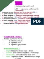 Neck Fascia Prof Talib Jawad PDF