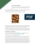 Información General Acerca de Los Mejillones