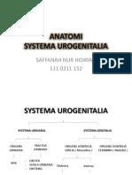 ANATOMI SYSTEMA UROGENITALIA.pptx