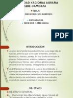 Orthoreovirus de Los Mamiferos