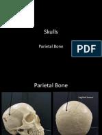 4-skulls-parietal