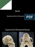 6-skulls-squamous