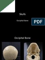 5-skulls-occipital