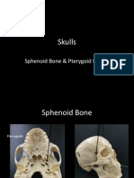 9aa-skulls-sphenoid and ajacent