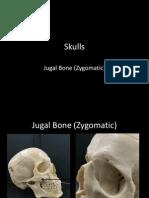 7-skulls-jugal