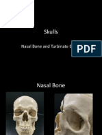 2-skulls-nasal