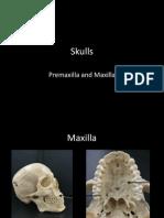 3-skulls-maxilla-premaxilla