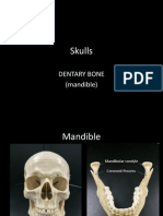 9a-skulls-dentary
