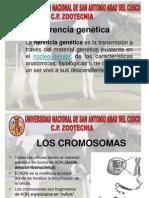 Herencia y mutación.ppt