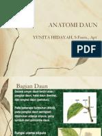 ANATOMI DAUN