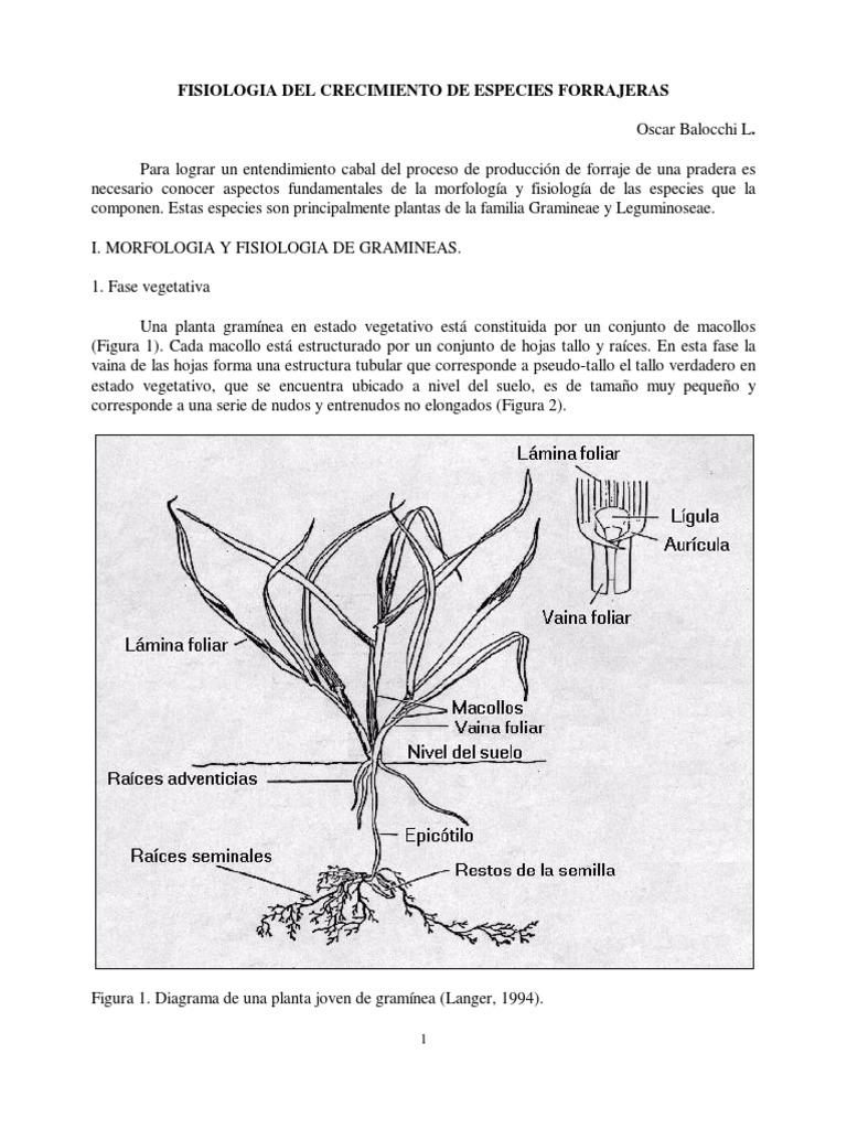 Moderno Plantas De Crecimiento Anatomía Y Función Bandera - Imágenes ...