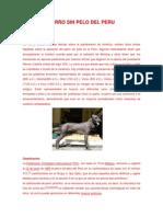 Perro sin pelo del Perú.docx