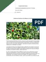 Evidencias Históricas Del Chiltepín en Sonora