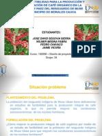 Presentacion Proyecto Cafe Organico 131209135356 Phpapp02