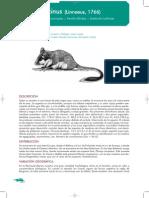 lirón careto.pdf