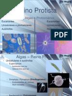 2012 - Reino Protista.ppt